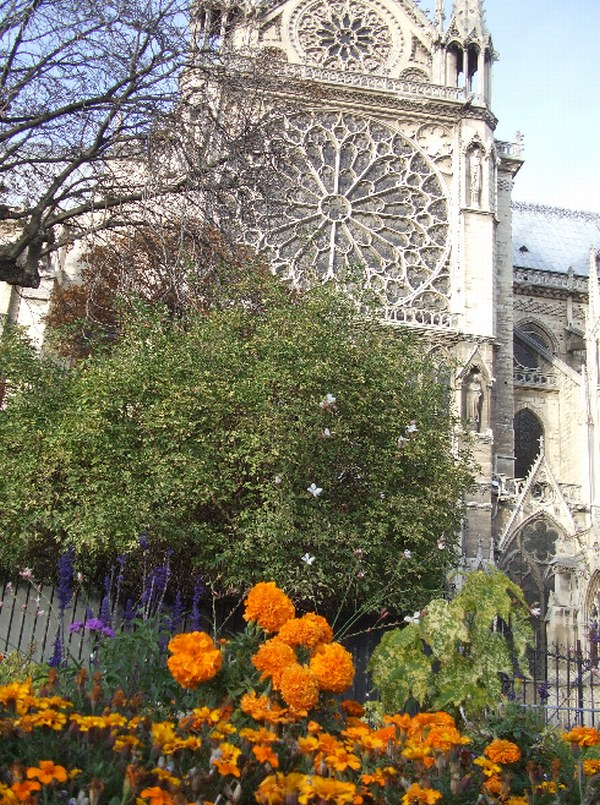 les fleurs au jardin de notre dame de paris cathedrale. Black Bedroom Furniture Sets. Home Design Ideas